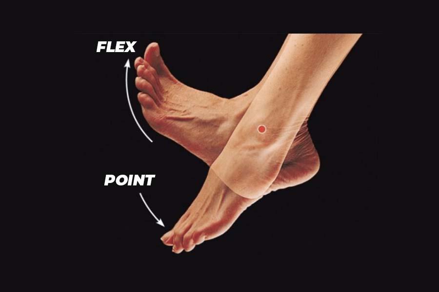 ankle flex vs point